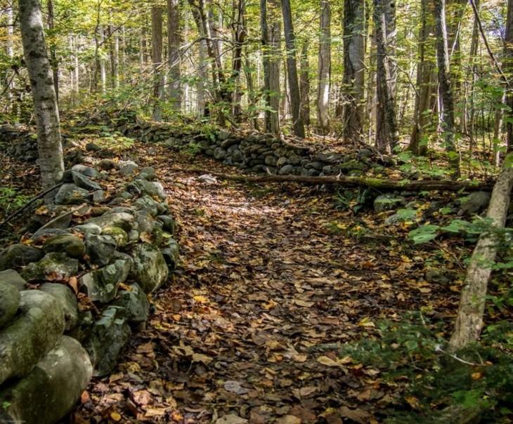 bosque en Tenesse