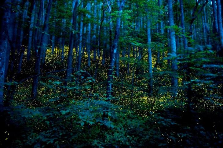 bosque de noche tenesse