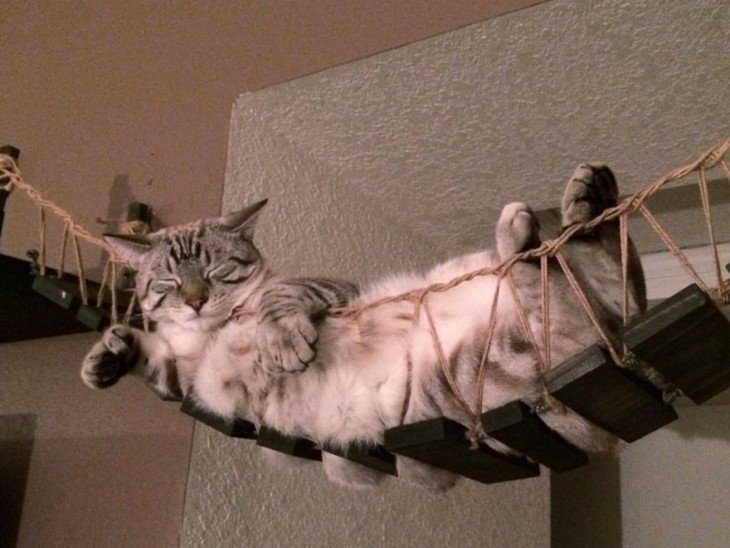 PUENTE ESTILO INDIANA JONES PARA GATOS