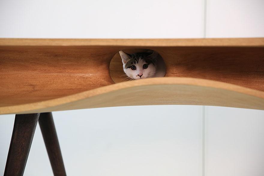 mesa para juegos de gatos