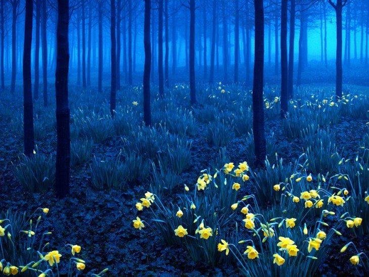 bosque negro, Alemania