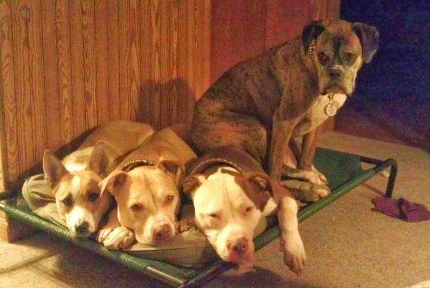 cuatro perros en camita
