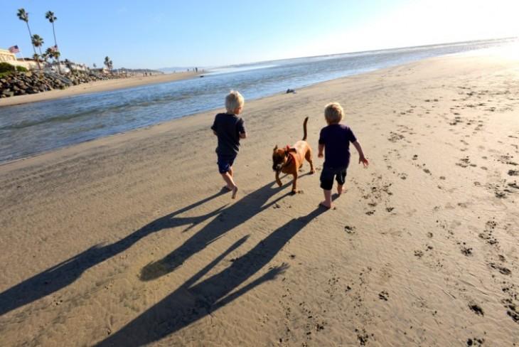 niños corriendo con perros