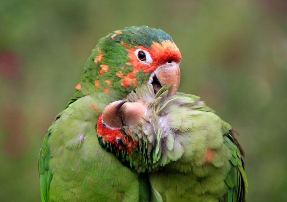 Fotos De Animales Salvajes Tomadas En El Momento Exacto