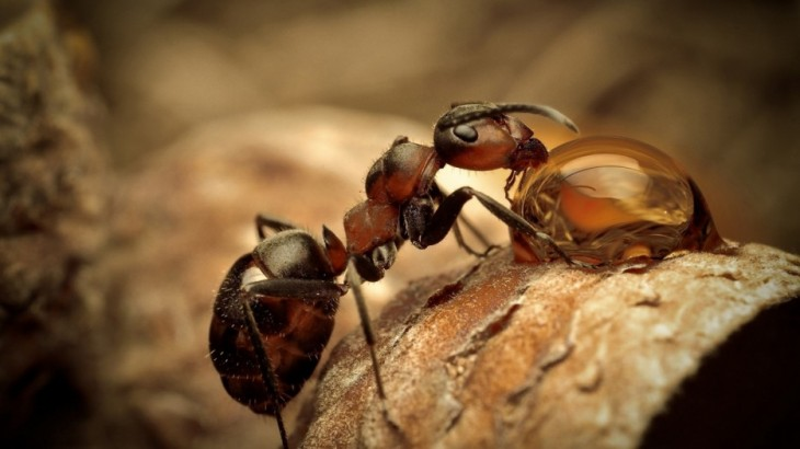 hormigas trabajando