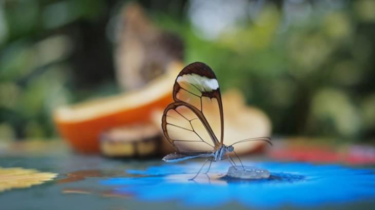 mosquito por volar