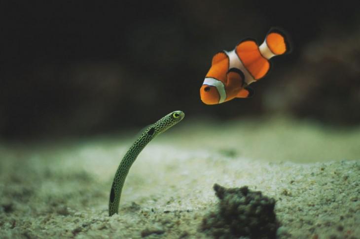 pez y serpiente abajo del agua