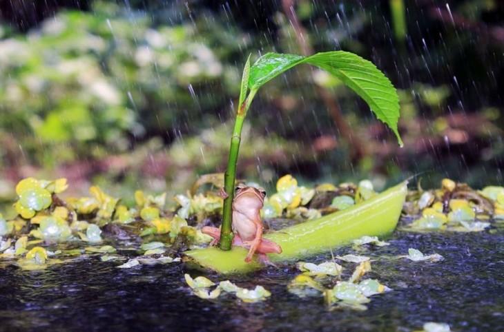 rana navegando