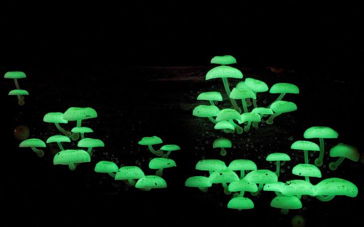 bosque tropical asia noche