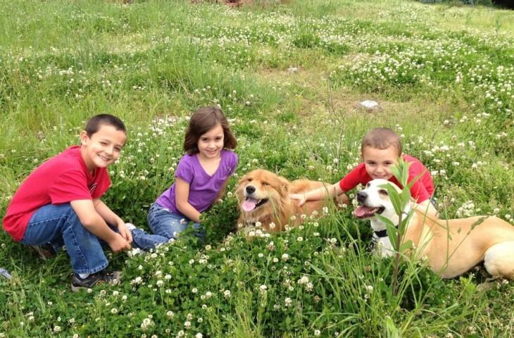 niños creciendo con perros socializab