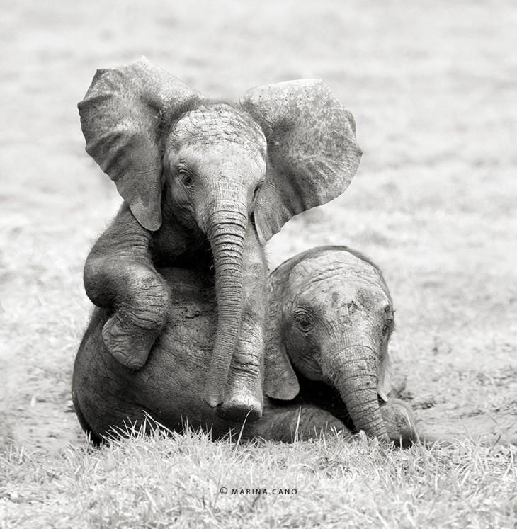Dos elefantes bebés sentados en el suelo