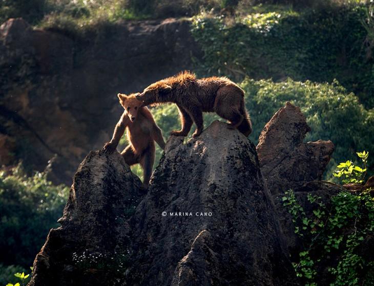 Fotografía de unos osos arriba de unas rocas