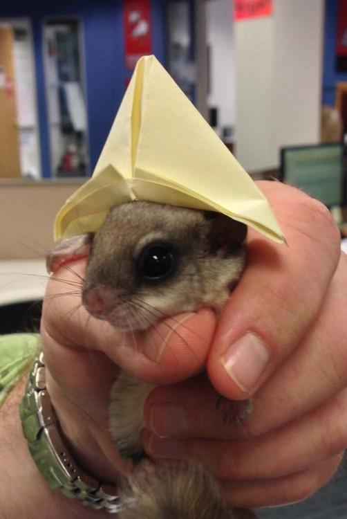 Una ardilla pequeña con un sombrero de papel en la cabeza