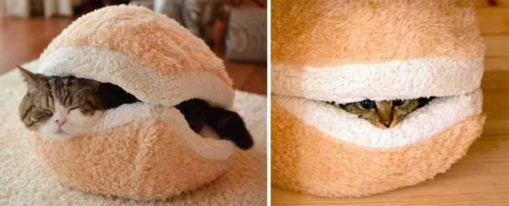 Gato en panes de hamburguesa durmiendo