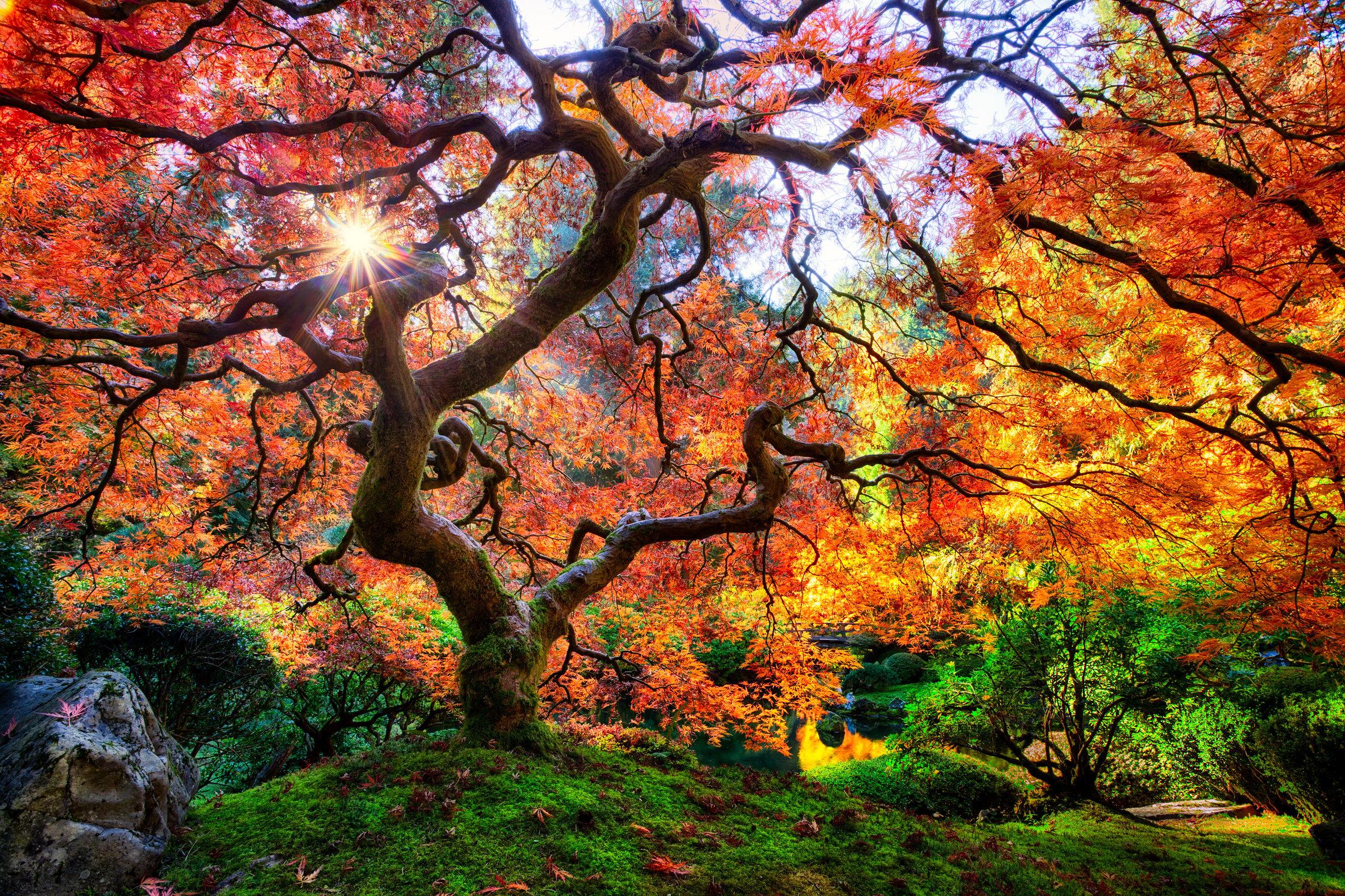 Fotos de los arboles mas hermosos y bellos del mundo for Arboles jardin japones