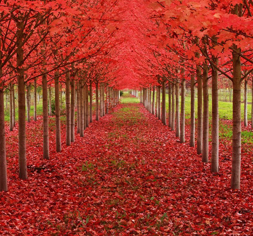 fotos de los arboles mas hermosos y bellos del mundo On arboles bonitos