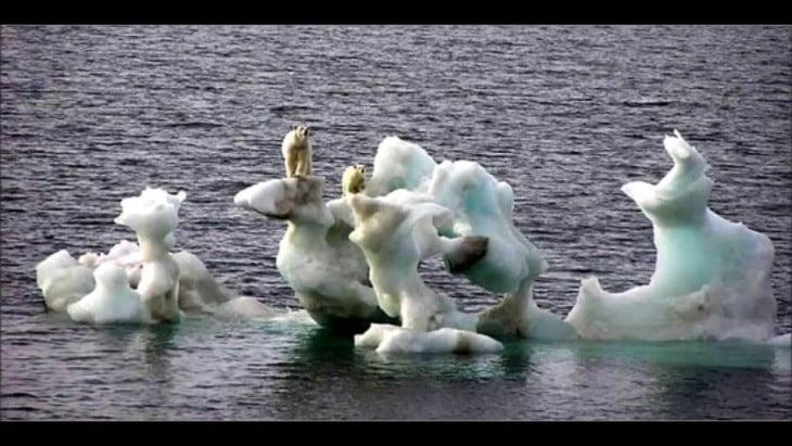 Polos polares derritiéndose con unos osos sobre ellos