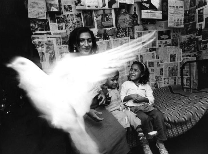 una paloma pasando frente a una mujer con sus hijos