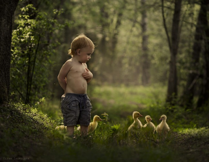 niño caminando con 5 patitos