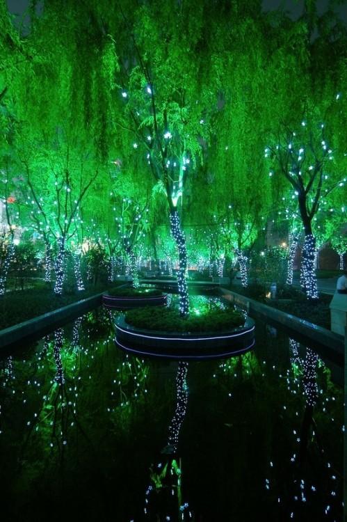 campo magico en Shangai
