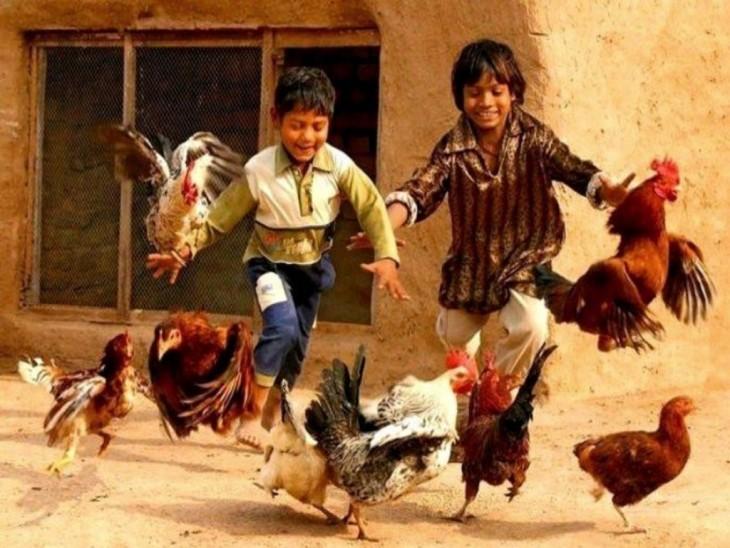 Casando gallinas en Pakistán