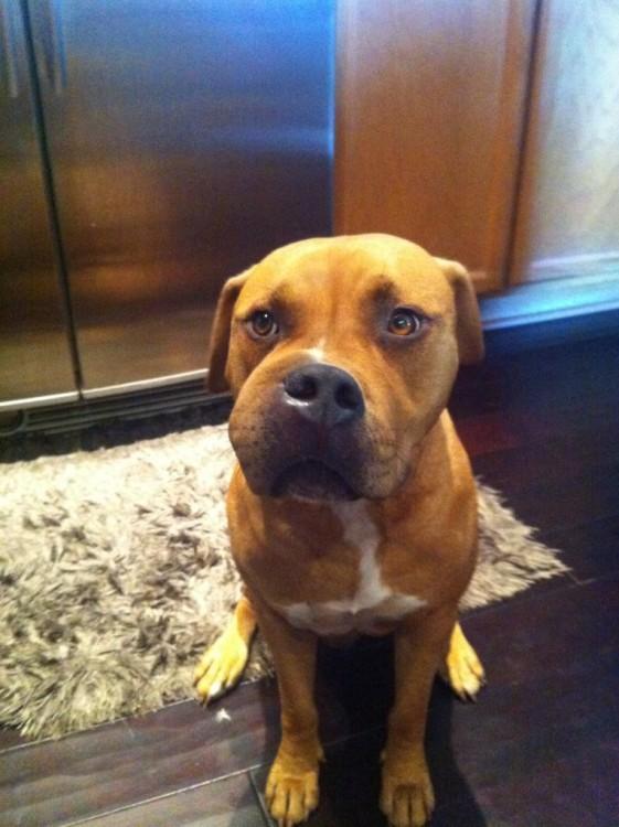 Perro sentado frente a un elevador con el hocico hinchado