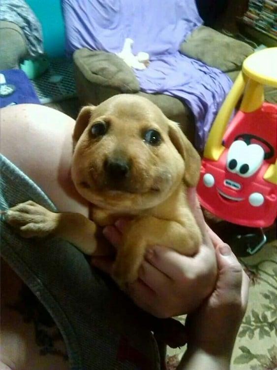 cara hinchada de un cachorro picado por una abeja