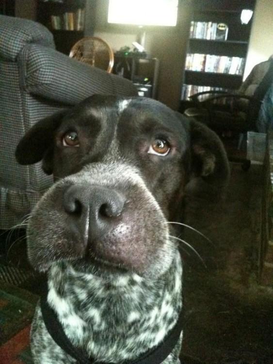 Cara de un perro con el hocico hinchado