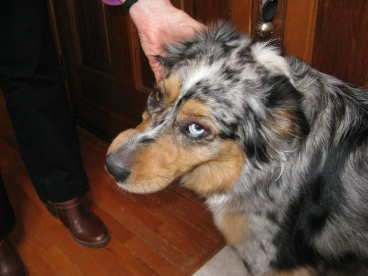 Cara triste de un perro mirando hacia arriba