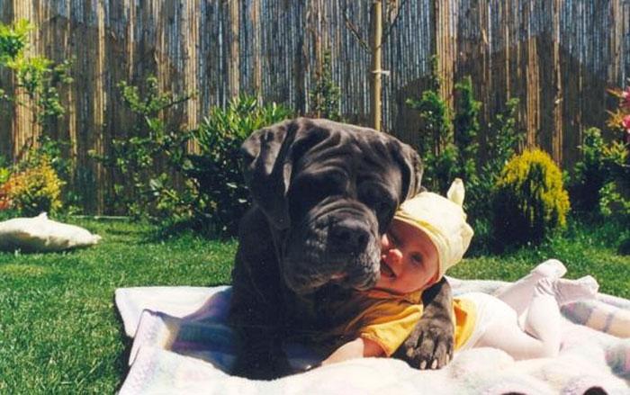 perrito abrazando al bebe