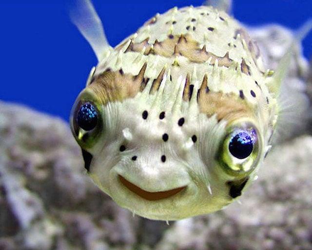 lindo pez que parece que se rie