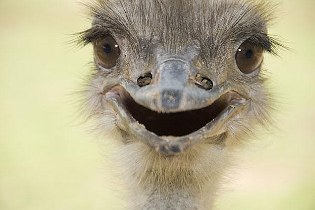 avestruz con una sonrisa