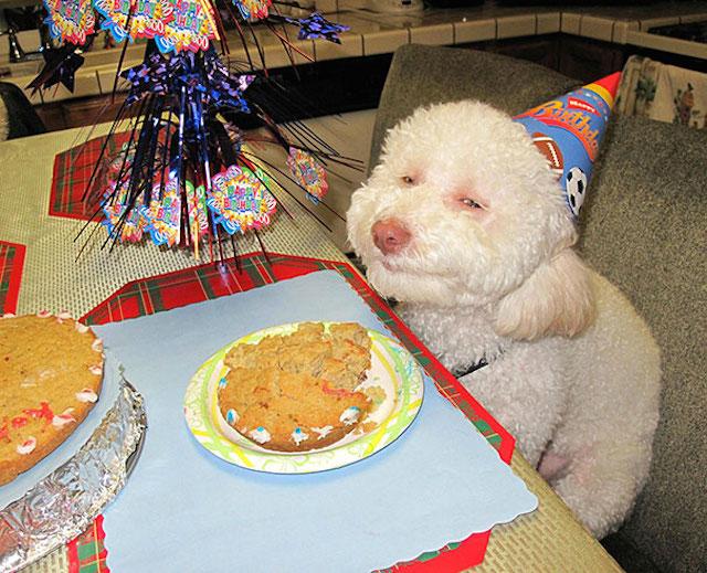 perro en cumpleaños con una sonrisa