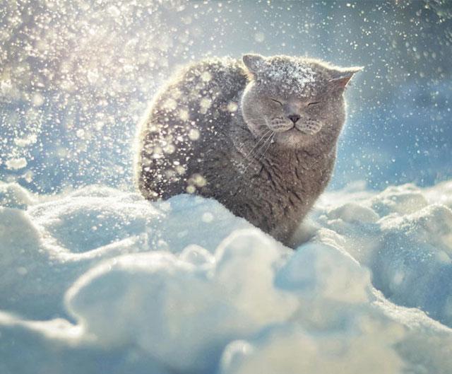 gato en la nieve con sonrisa