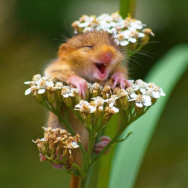ardillita que parece que se esta riendo arriba de una flor