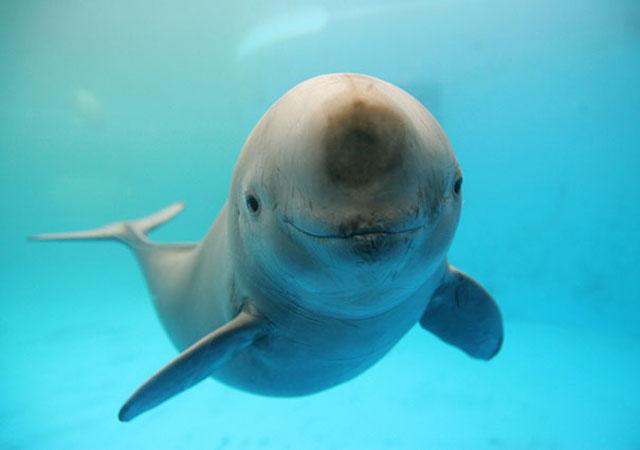 Delfín que nada y parece que rie