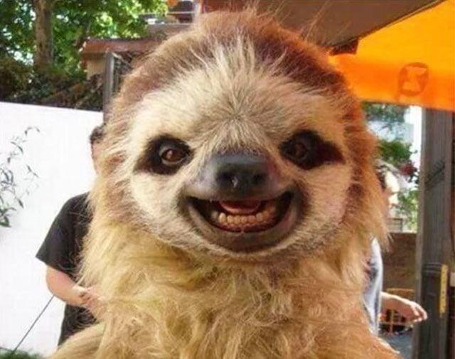 Un perezoso que parece que rie