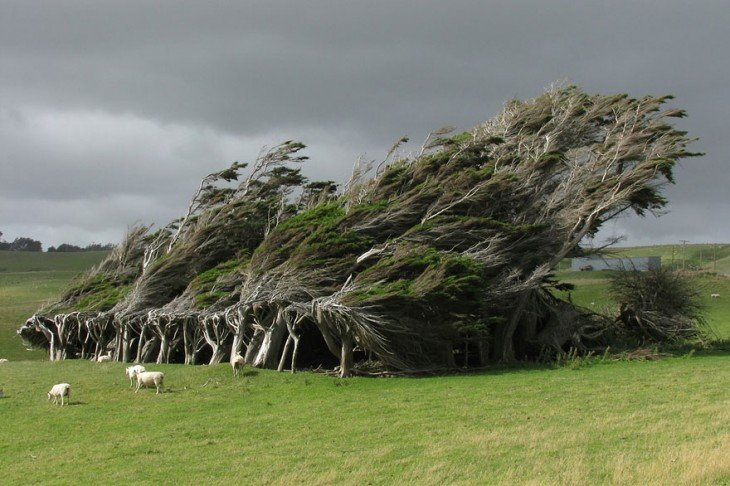 arboles azotados por el viento