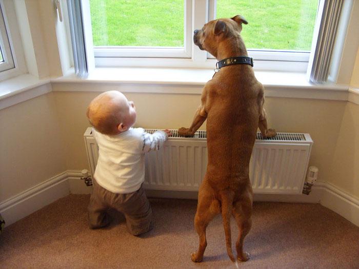 de pie perrito y bebé