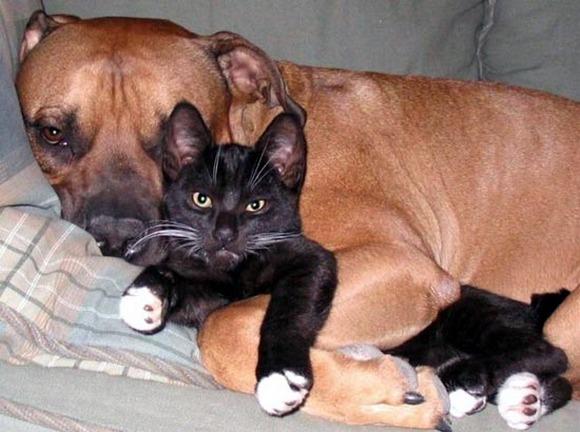 perro aplastando a gato