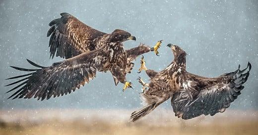 fotografias de animales tomadas en el momento exacto