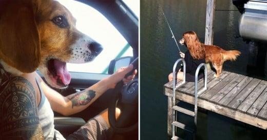 fotos de perros tomadas en el momento exacto
