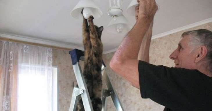 gato cambiando lamparita