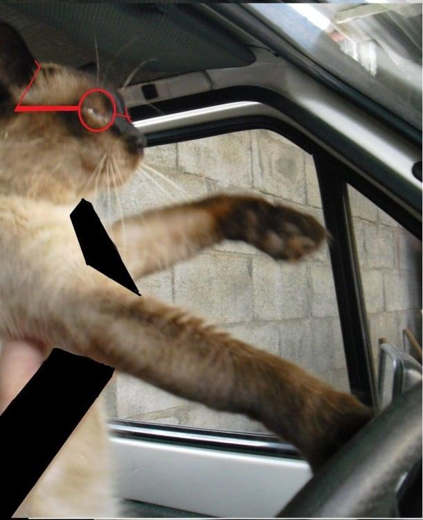 gato manejando 2