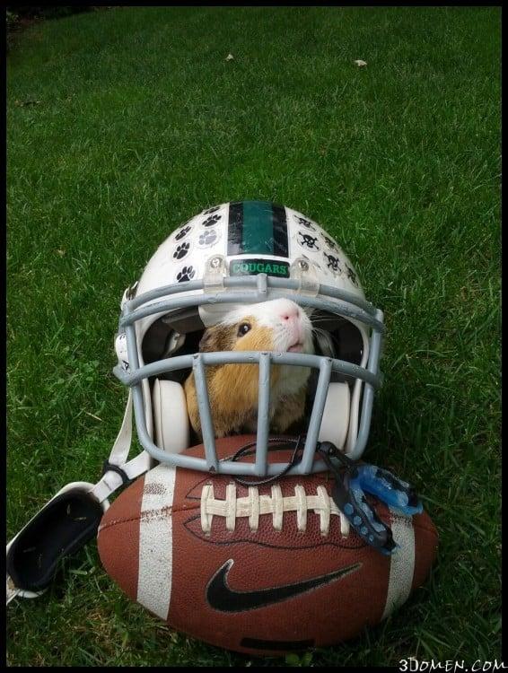 hamster jugando football