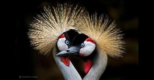 bellas imagenes de animales salvajes
