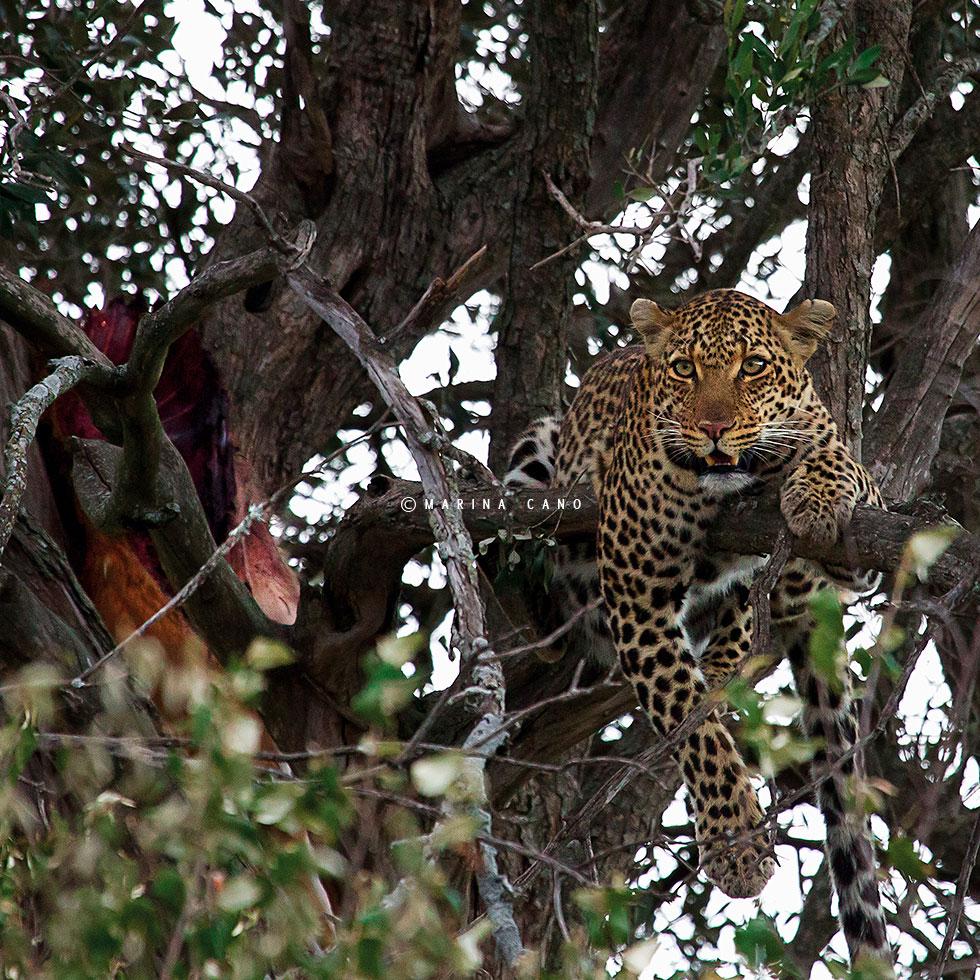 Hermosas Imagenes De Animales Salvajes En Su Habitat Narutal