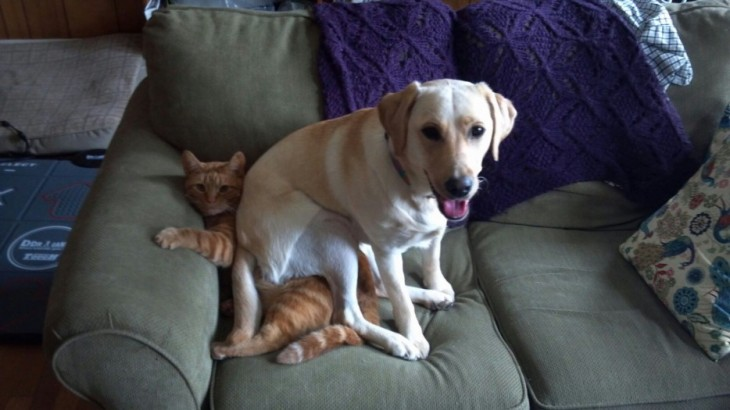 perro en sillon con gato