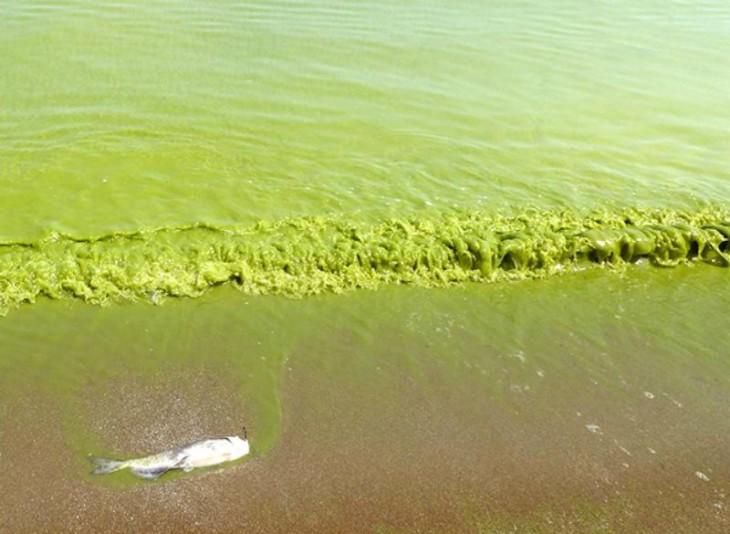 mar verde