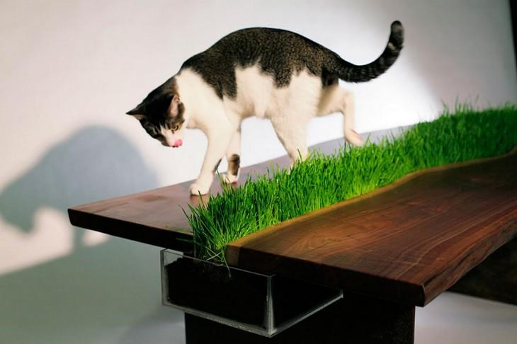 geniál mesa caon pasto creciendo en medio, ideál para gatos